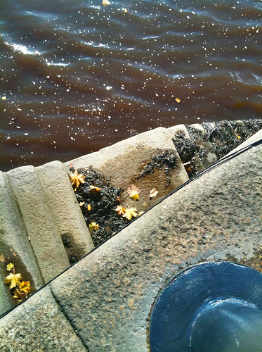Tyne, leaves, seaweed and steps
