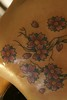 Cherry tree tattoo Tattoo by Nick