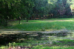 Crooked Tree Wildlife Sanctuary (Otto Monge) Tags: tree america belize wildlife central sanctuary crooked wetland humedal
