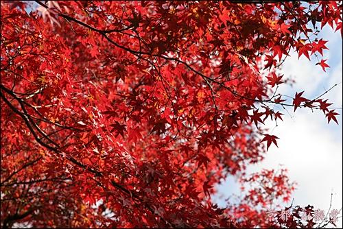 京都 永觀堂