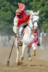 Colors of Punjab Pakistan (Abbrar Cheema) Tags: pakistan horse festival rural nikon folk culture tent punjab cultural cheema d300 pegging abbrar abrarcheema