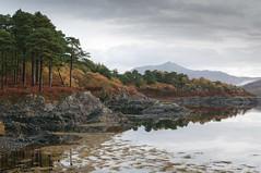coast scotland shoreline samsung tamron ardnamurchan gx20 scotspine