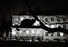 Nocturnal... (Harlemshuffle) Tags: black film night cat nocturnal warsaw canonetgiiiql17 ilfordpan400