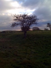 Fotheringhay Tree 3
