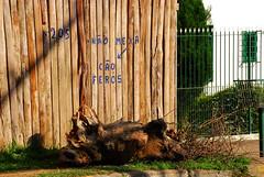 (Robvini) Tags: muro casa grade cachorro cerca lixo calada recado sapucaiadosul sapucaia