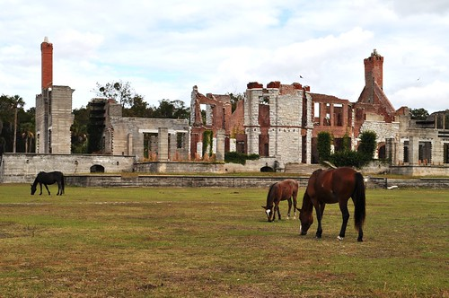 Wild Horses at Dungeness, Cumberland Island National Seashore