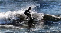 SURFER DUDE (photogtom43) Tags: gulfofmexico florida surfer surfing panamacitybeach standrewsstatepark floridastateparks nikond40x nikkor70300afsvrlens