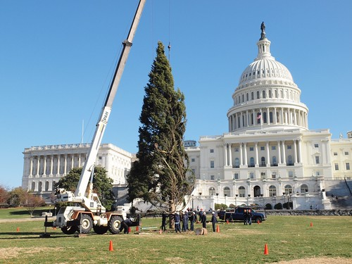 """Crewmembers with the Capitol Architect's Office guide the Capitol Christmas Tree into the five-foot-deep stand that will hold the tree upright throughout December on the west lawn of the Capitol building. The Lighting Ceremony for the tree is slated for Tuesday, December 7."" USFS photo by Keith Riggs"