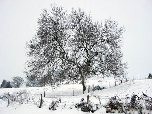 Lovely Snow Covered Tree