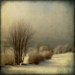 Spring is so far away... (pixel_unikat) Tags: winter snow landscape austria bush textured mhlviertel 9degrees thankstoskeletalmessfortextures coldbutsobeautiful ilovethecoldandpureairofwinter
