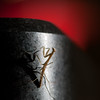 surealism (nosha) Tags: new winter red abstract black beautiful beauty mantis photography newjersey praying nj jersey sureal lightroom 105mmf28 2011 nosha matid nikond300