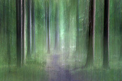 the path (Kerstin Langenberger) Tags: trees abstract motion blur forest landscape motionblur magical itc intentionalcameramovement