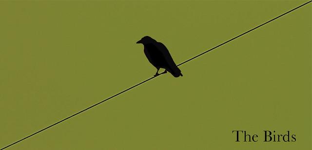 Image of minimalistc The Birds poster