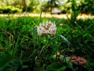 Florecilla del parque
