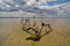 (dominic bartolini) Tags: beach driftwood cape cod chapin