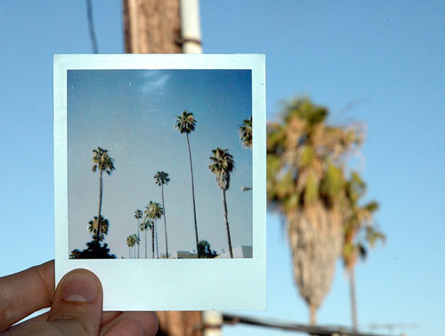 the palm trees of Los Angeles