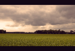 Nature (IsoD300) Tags: sun green nature clouds three corn woods groen blauw air natuur wolken boom mais lucht bos geel rood zon hout