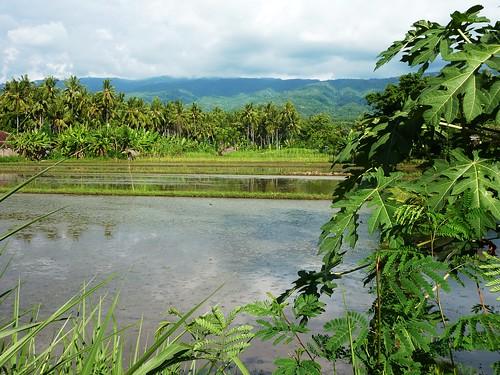 Bali-Gilimanuk-Lovina (215)