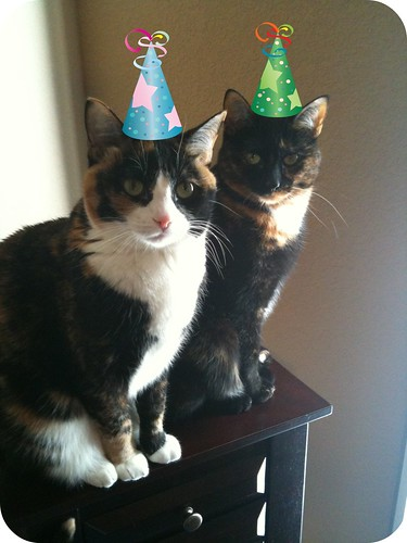 kitty celebration