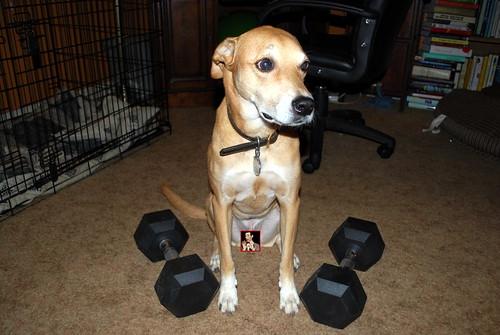 Rex w/weights