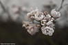 Rose (Hans-Kristian V) Tags: camera pink blackandwhite white black cold flower rose garden flash feel off 35mmf18 nikond40 sb400 sc28