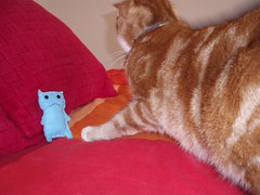 Flimsy is suddenly terrified by giant Monty! (Kulabeth) Tags: cat flimsy