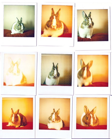 polaroid-bunny.preview