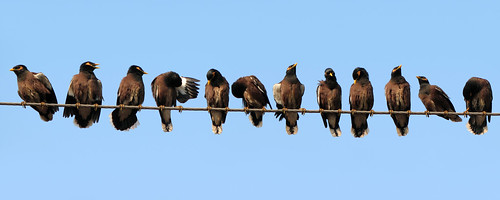 Life On The Wire by wildxplorer, on Flickr