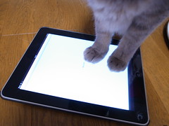 Ahchan on iPad