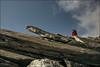 IMG_0381 (fswerk) Tags: val alpen zillertal südtirol adige niederer niedere pfitschtal vizze weiszint weiszintscharte