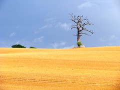 That tree again (S Clark) Tags: tree nature field rural canon countryside village haywardsheath