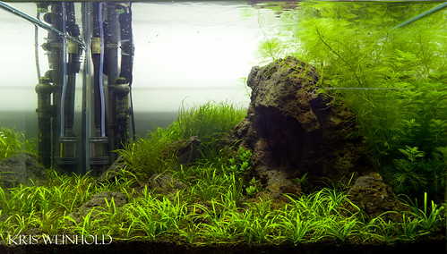 33G Rimless Aquarium