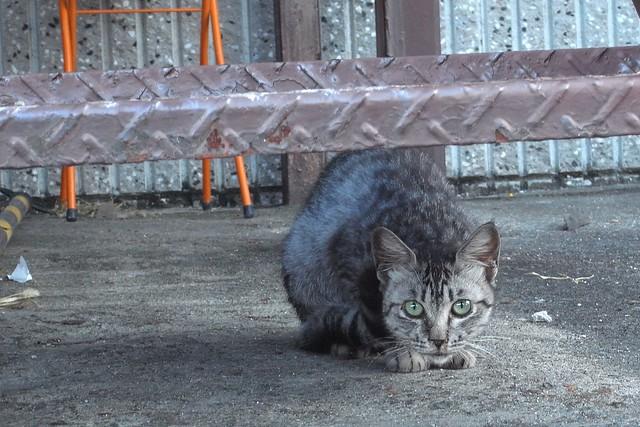 Today's Cat@2010-09-10