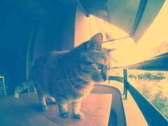 what the hell? (ninafontcuberta) Tags: cat gato hero goprocamera