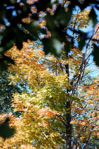 Leaves Along Preston Harmony Trail in MN