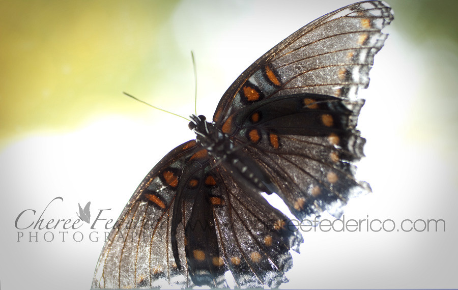 Butterfly from underneath