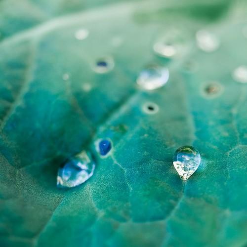 Cuba Gallery: Organic / macro / closeup / garden / leaves / leaf / natural / nature / rain / water droplets / photography