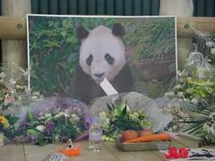 Rest in Peace, Kou Kou (TaoTaoPanda) Tags: panda koukou ojizoo