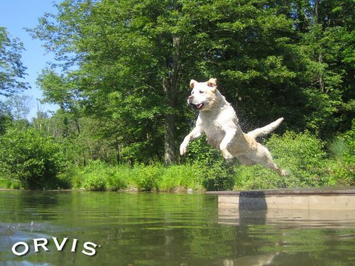 Orvis Cover Dog Contest - Sean Bonnouvrier the 3rd