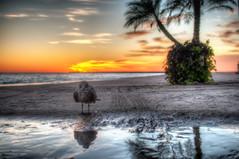 300/365 (ShutterRunner) Tags: street chicago beach sunrise oak hdr