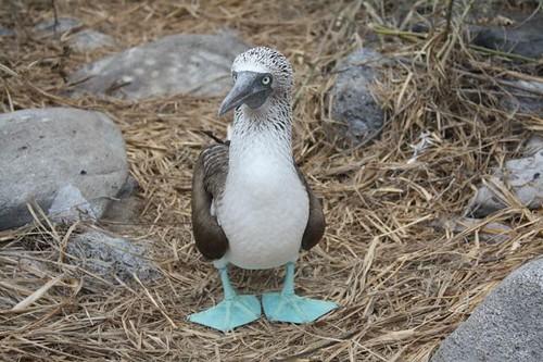 galapagos-photos