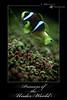 princess of the under world ( Fahad almnay3 \\\\) Tags: world fish flower nature beauty canon amazing underwater princess under charming fahad تحت جمال الحياة طبيعة الحيوانات سمك الماء فهد 450d اميرة المنيع البحار البحرية almunayaa بيئية