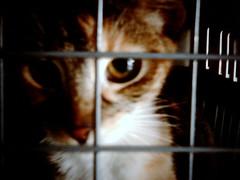 Aquí hay gato encerrado... (Centro Veterinario Animal)