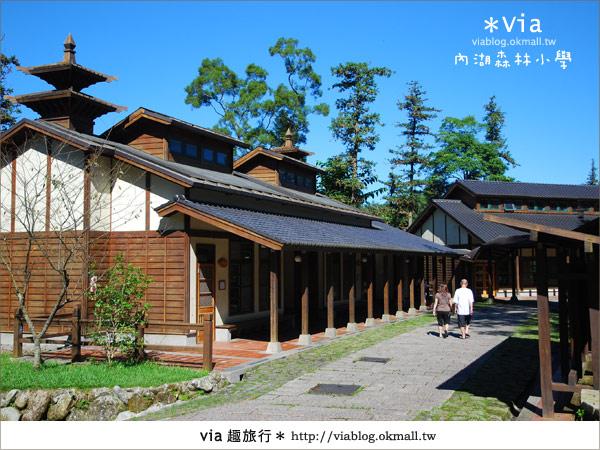【溪頭一日遊】森林中的夢幻校園~內湖森林小學
