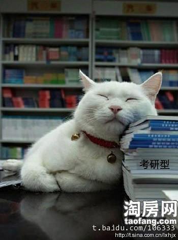貓的睡姿12