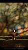 Happy Bokehlicious Weekend    [7/50] (© C H A I T U) Tags: light lamp 50mm bokeh 18f deepam bokehlicious krishlikesit