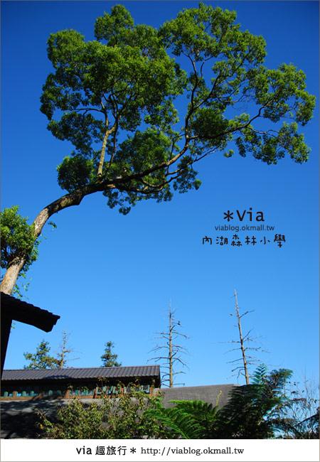 【溪頭一日遊】森林中的夢幻校園~內湖森林小學32
