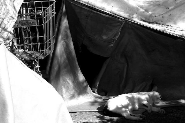 Today's Cat@2010-09-18