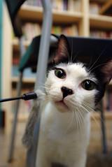 DSCF2860 () Tags: cat minibook s5 1424