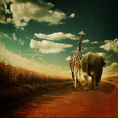 you'll never walk alone... (~ Pixel Passion ~) Tags: friends wild elephant texture nature field animals way landscape zoo mood moody peace friendship natural path wildlife free atmosphere hannover safari harmony giraffe wilderness conceptual atmospheric wildness zoohannover